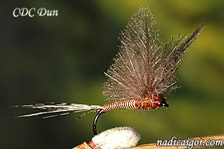 CDC-Dun_nadicaigor.com