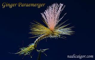 GingerParaemerger_318